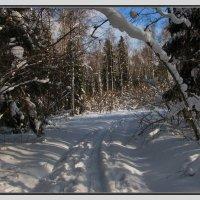 зима :: Владимир ( Vovan50Nestor )