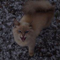 Первый снег! :: Елена