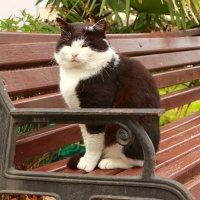 Кот,просто кот. :: АНДРЕЙ ШЕВЧЕНКО