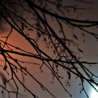 Мгновение уходящей осени :: Анастасия Графова