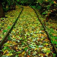Дорожка к Осени :: олег свирский