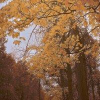 Незримо пушкинские строки вплелись в осенний листопад..... :: Tatiana Markova