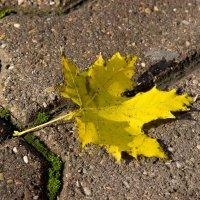 Осенний листок :: Алена Д