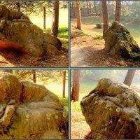 Чудище в Кисловодском курортном парке :: Нина Бутко