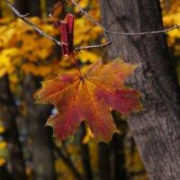 """Осень ! """"Не падай!"""" ;) :: Вен Гъновски"""