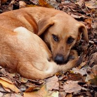 греясь в прелых листьях 2 :: Александр Прокудин