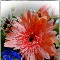 цветок :: Natalia Mihailova