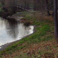 Водоплавающие (пока пруд совсем не замерз) :: Андрей Лукьянов