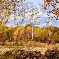 Осень в Мезмае :: Геннадий Клевцов