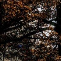 В пучинах ноября :: Ирина Сивовол