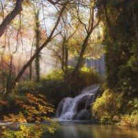 Осенний лес :: Maria