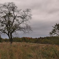 Осень бывает грустной. :: Галина .