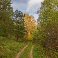 Дорога в осень :: Sergey Polovnikov