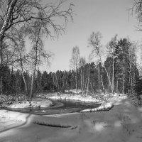Застывшие тихие воды ручья... :: Татьяна .