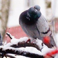 Зима пришла... :: kolyeretka
