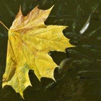 Осенний лист в окружении. :: Татьяна Помогалова