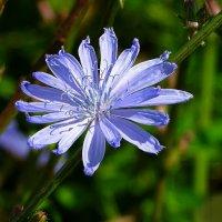 Разные и красивы цветы :: Милешкин Владимир Алексеевич