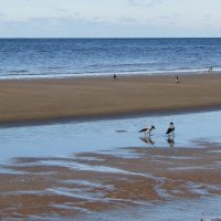 Морские прогулки :: veera (veerra)
