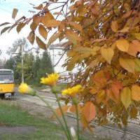Жёлтый цвет осени!... :: Алекс Аро Аро