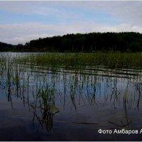 Вид на озеро :: Андрей