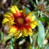 Цветок :: Nina Yudicheva