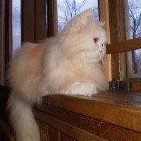 персик на окне :: венера чуйкова
