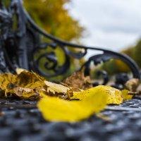 Осень в Усадьбе Кусково :: Сергей Кудряшов