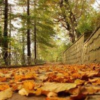 Осень :: АНДРЕЙ ШЕВЧЕНКО