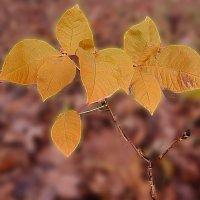 маленький  росток :: георгий петькун