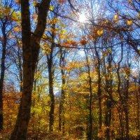 Тепло Осени :: Трофимюк Павел