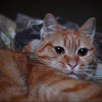 Лежебока рыжий кот отлежал себе живот. :: Людмила Богданова (Скачко)