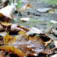 Осенние листья :: Денис Масленников