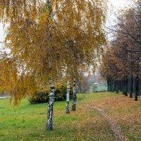 В парке. :: Владимир Безбородов