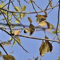 сквозь листья :: Бармалей ин юэй