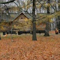 Осенью в парке. :: Ирина Лебедева