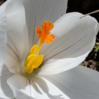 Цветок :: Павел