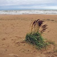 Осенний пляж :: veera (veerra)