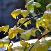 Осень, капли... :: Бармалей ин юэй