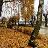 Осенний пейзаж :: °•●Елена●•° Аникина♀