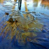 Отражение на тонком льду. :: Елена Савчук