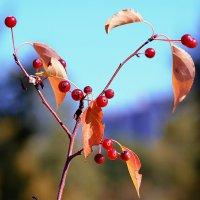Осенние яблочки. :: Виктор Иванович