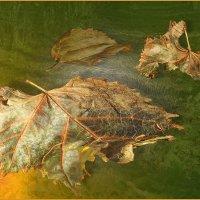 умирающие листья :: Александр