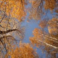 Немного золотой осени :: Татьяна Шаклеина