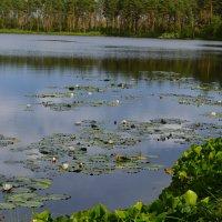 Туголянское озеро :: Сергей Мошков