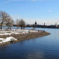 Весна на Неве :: larisa Киселёва