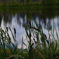 Озеро детства :: Сергей Мошков
