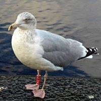 Чайка :: Nina Yudicheva