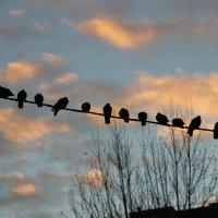 Птички :: Николай П