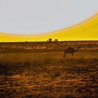 Camel :: Александр Липовецкий