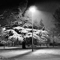 Первый снег. :: Лилия .